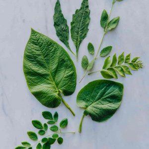 Fresh herbs Westlandpeppers