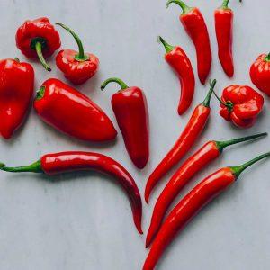 Verse pepers & paprika's Westlandpeppers