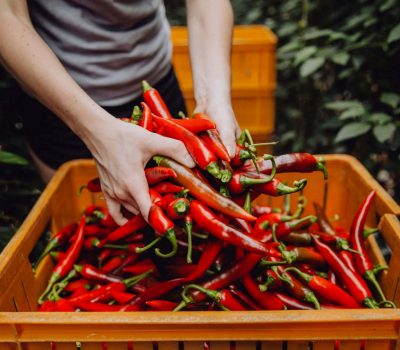 about-us_westlandpeppers-1